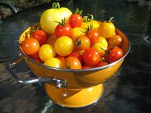 Tomatoes-w