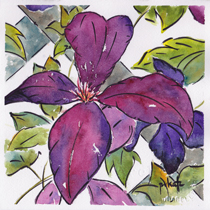Purple Clematis-w