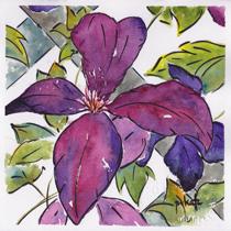 Purple Clematis-w
