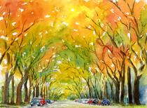 Autumn Elms