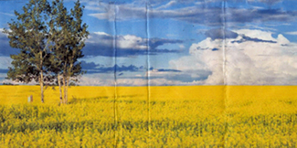 Tree Canola Fold 1-100-4inches