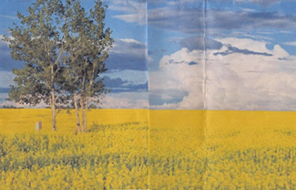 Tree Canola Fold 2-100