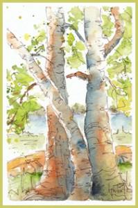 Birch Buddies-w